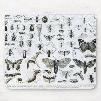 Entomologie Tapis De Souris