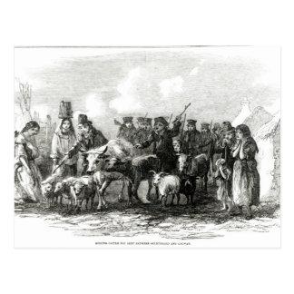 Entraînement des bétail pour le loyer carte postale