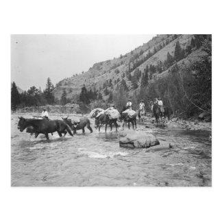 Entraînement des mules de paquet à travers une carte postale