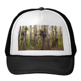 Epiphyte Bromeliad dans la forêt de la Floride Casquette