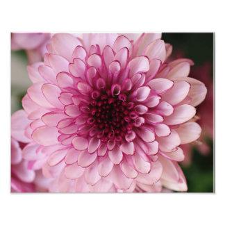 Épreuve photographique rose de fleur impression photo