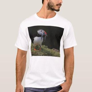 Équille et T-shirt de macareux