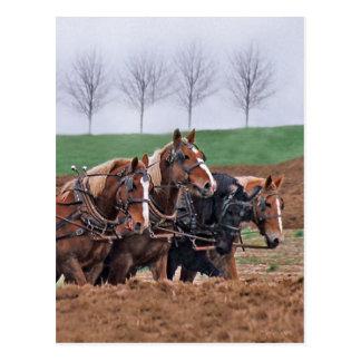 Équipe de carte postale de chevaux