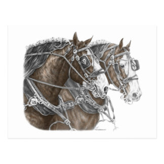 Équipe de cheval de trait de Clydesdale Carte Postale