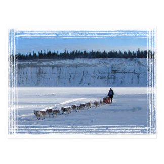 Équipe de recherche du Yukon Carte Postale