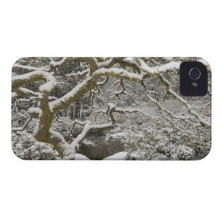 érable japonais Neige-couvert 2 Coques Case-Mate iPhone 4