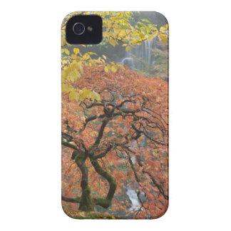 Érable japonais (palmatum d'Acer) dans la couleur Coques iPhone 4