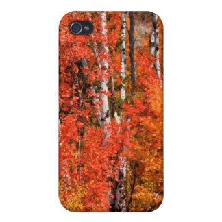 Érable rouge (Acer Rubra) et trembles Coques iPhone 4/4S