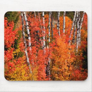 Érable rouge (Acer Rubra) et trembles Tapis De Souris