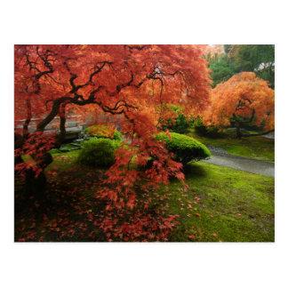 Érables japonais dans un jardin japonais en carte postale
