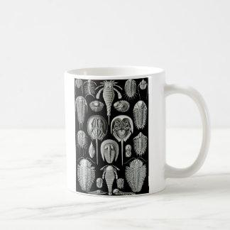 Ernst Haeckel - Aspidonia Mug