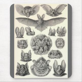 Ernst Haeckel - chauves-souris de Chiroptera Tapis De Souris