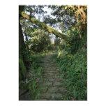 Escalier aux arbres carton d'invitation  12,7 cm x 17,78 cm