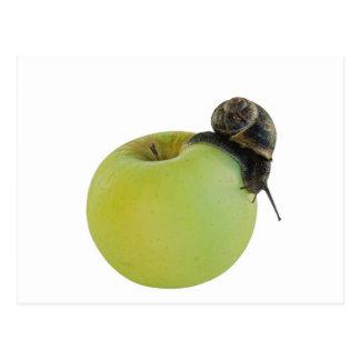Escargot et pomme carte postale