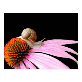 Escargot sur une fleur carte postale