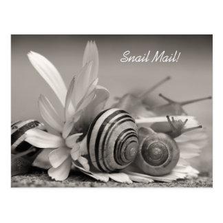 Escargots de jardin élégants sur la fleur de carte postale