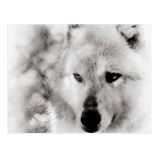 Esprit de loup carte postale