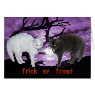 Esprit en tant que carte noire et blanche de chats