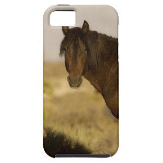 Étalon sauvage de mustang, troupeau de Wheeler Étuis iPhone 5