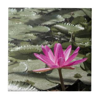 Étang de fleur de Lotus de zen Petit Carreau Carré
