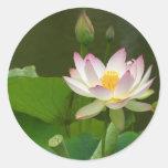 Étangs de fleurs de Lotus Autocollants Ronds