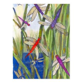 Été de libellule carte postale