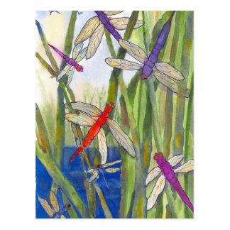 Été de libellules carte postale