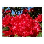 Été rouge de cartes postales de jardin de fleurs d