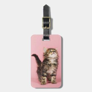 Étiquette À Bagage Assez dans le chaton rose