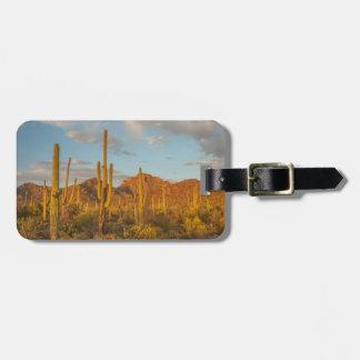 Étiquette À Bagage Cactus de Saguaro au coucher du soleil, Arizona