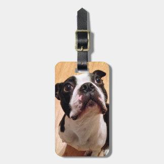 Étiquette À Bagage Chien de Boston Terrier