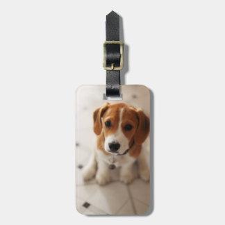 Étiquette À Bagage Chiot 2 de beagle