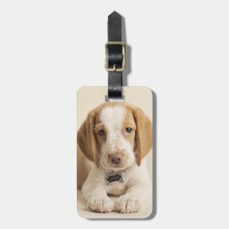 Étiquette À Bagage Chiot de beagle