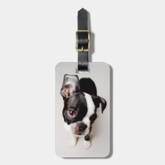 Étiquette À Bagage Chiot d'Edison Boston Terrier