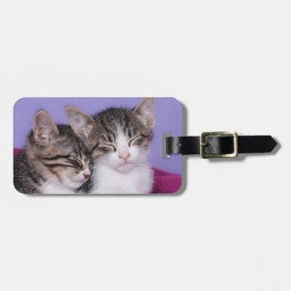 Étiquette À Bagage Deux chatons mignons faisant une sieste