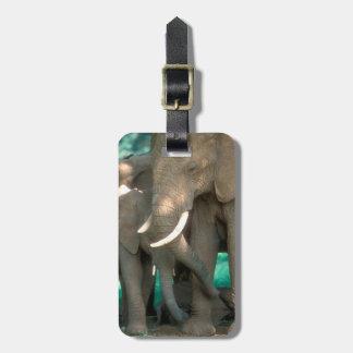 Étiquette À Bagage Éléphants protégeant des jeunes