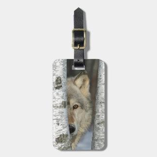 Étiquette À Bagage étiquette de bagage avec la photo du loup gris