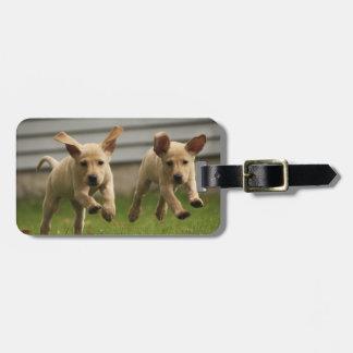Étiquette À Bagage Fonctionnement jaune de chiots de Labrador