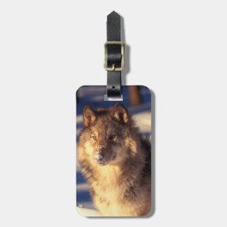 Étiquette À Bagage Loup gris dans la neige