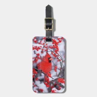Étiquette À Bagage Mâle cardinal du nord, hiver, IL