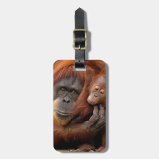 Étiquette À Bagage Orang-outan de mère et de bébé
