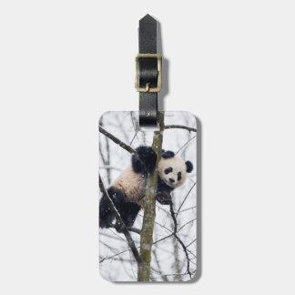Étiquette À Bagage Panda de bébé dans l'arbre