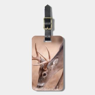 Étiquette À Bagage Pâturage masculin de cerf de Virginie