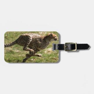 Étiquette À Bagage Plein galop de guépard (Acinonyx_jubatus)