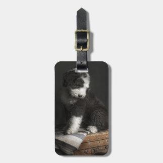 Étiquette À Bagage Portrait de chiot de queue écourtée dans le studio