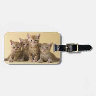 Étiquette À Bagage Quatre chatons de Shorthair d'Américain