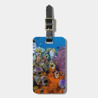 Étiquette À Bagage Récif coralien et poissons