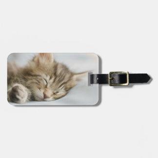 Étiquette À Bagage Sommeil de chaton de ragondin du Maine