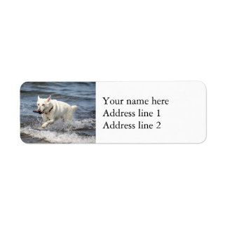 Étiquette Allemand blanc Shepard sur le lac George