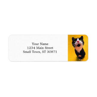 Étiquette Chat noir et blanc de chaton-animal familier de